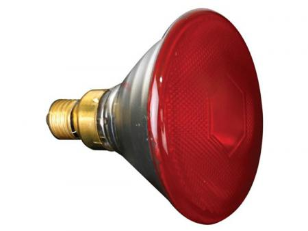 Rood Licht Lamp : Halogeenlamp e w rood lamptype halogeen lampvoet e